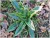 Future Orchidée sauvage dans le chemin (22)