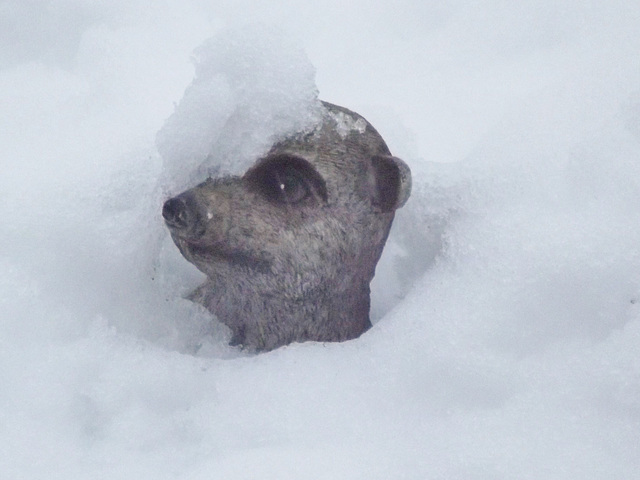 Meerkat ornament peeking out of the melting snow.