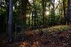 Sonnenaufgang im Herbstwald - Sunrise in the autumn forest