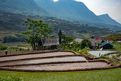 Sa Pa paddy fields