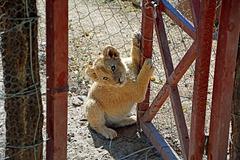 Der Zaun in Sambia