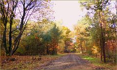 Wood walk...