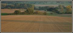 Herbstacker / autumn field