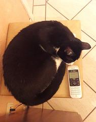 Miro möchte telefonieren ...