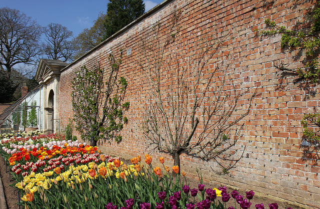 Tulip Time at Tyntesfield