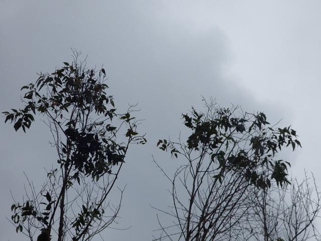 Arboles invernales