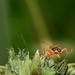 Beetle imitates Beatle
