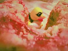 """""""Ich habe eine rosa Kuchen für Heidiho gebacken."""""""