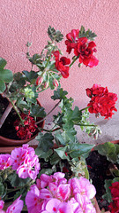 La bellezza dei fiori!