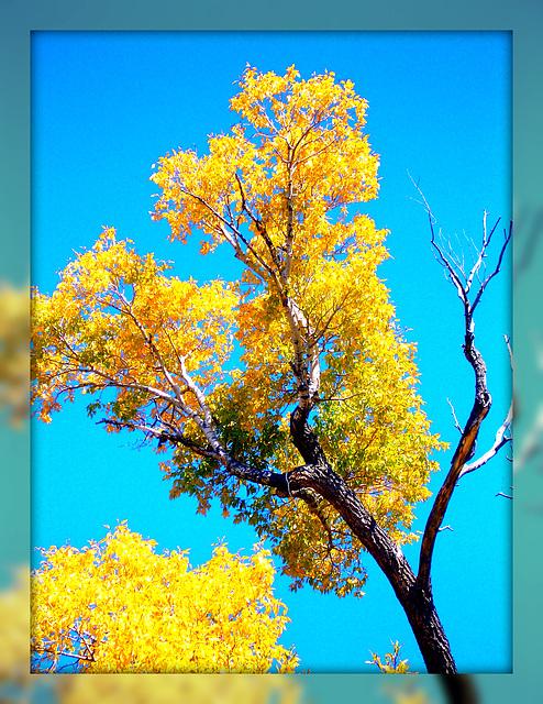 gold in fall