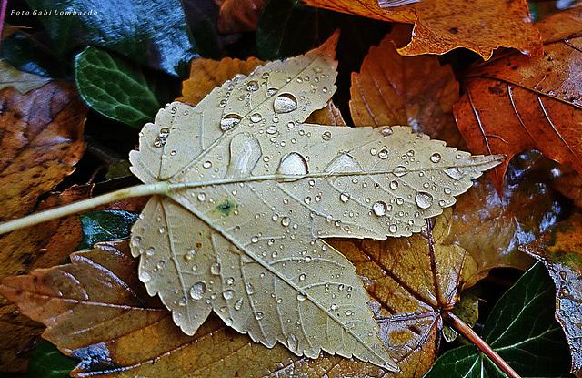 first autumn tears