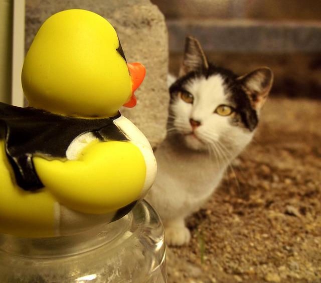"""""""Sì, Signorina Kitty, mi piace gnocchi molto!"""""""