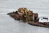 patagonian ship graveyard