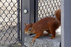 Explored - Eichhörnchen (Wilhelma)