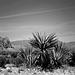 desert - 1986