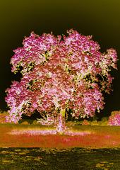 An enchanted Tree