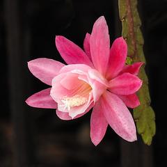 Gorgeous succulent flower