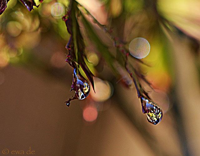 blues in drops