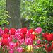 Last Spring Fling