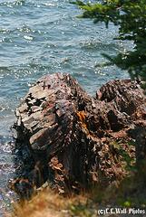East Quoddy Head (New Brunswick)