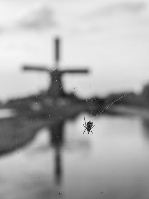 Spin - Spider
