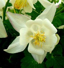 Beauté immaculée / White beauty