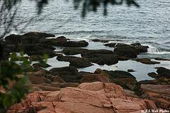 Acadia Tidal Pool