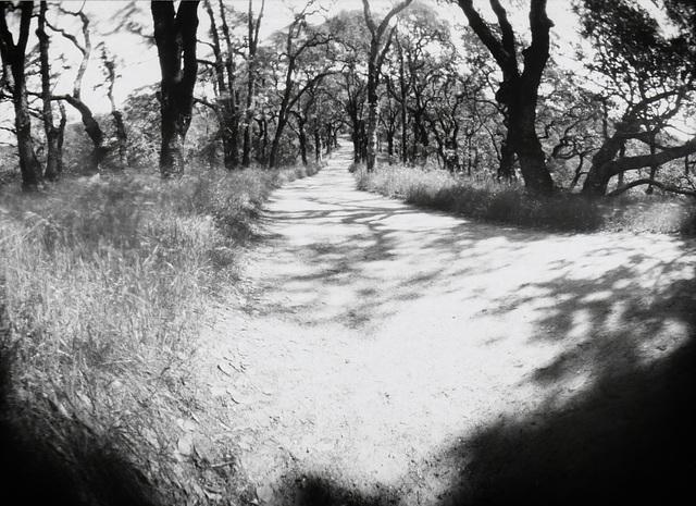 Into the oaks