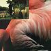 rousseau's flamingo moonsong