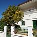 Orange Tree In Santiago Del Teide