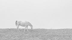 the hazy horse eating the horizon
