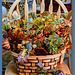 The Autumn Basket