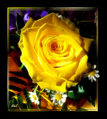 Yellow rose, painted.  ©UdoSm