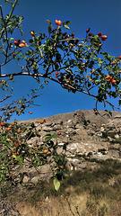 Rosehips and granite