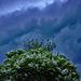 catalpa un soir d'orage 3