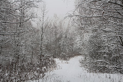 Декабрьский снег. La neige de décembre.