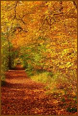 Forêt de Chantilly