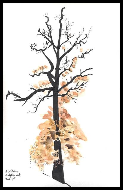 A dying oak
