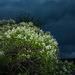 Catalpa un soir d'orage 2