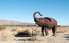 Borrego Springs, CA elephantine economy (# 0639 )