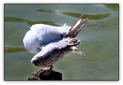 Happy Seagulls Sunday (◕‿-)