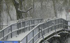 Seagul bridge