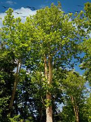 1 (44)...austria forest...tree...wood