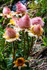 Have A Nice Weekend - with Geum Reptans