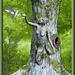 Amour d'arbre****************