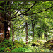 Wald am Königssee