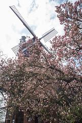 Windmühle Hoyerhagen