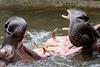 Jeux d'hippopotames