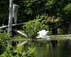 31/50 grande aigrette-great egret