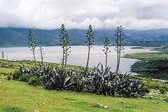 Lago la Angostura - Tafí del Valle